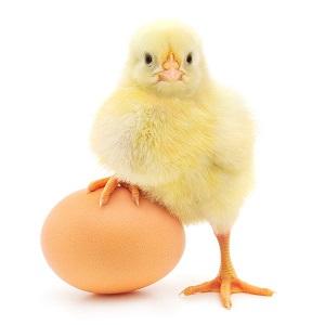 Howard Shaw, Egg Fraudster